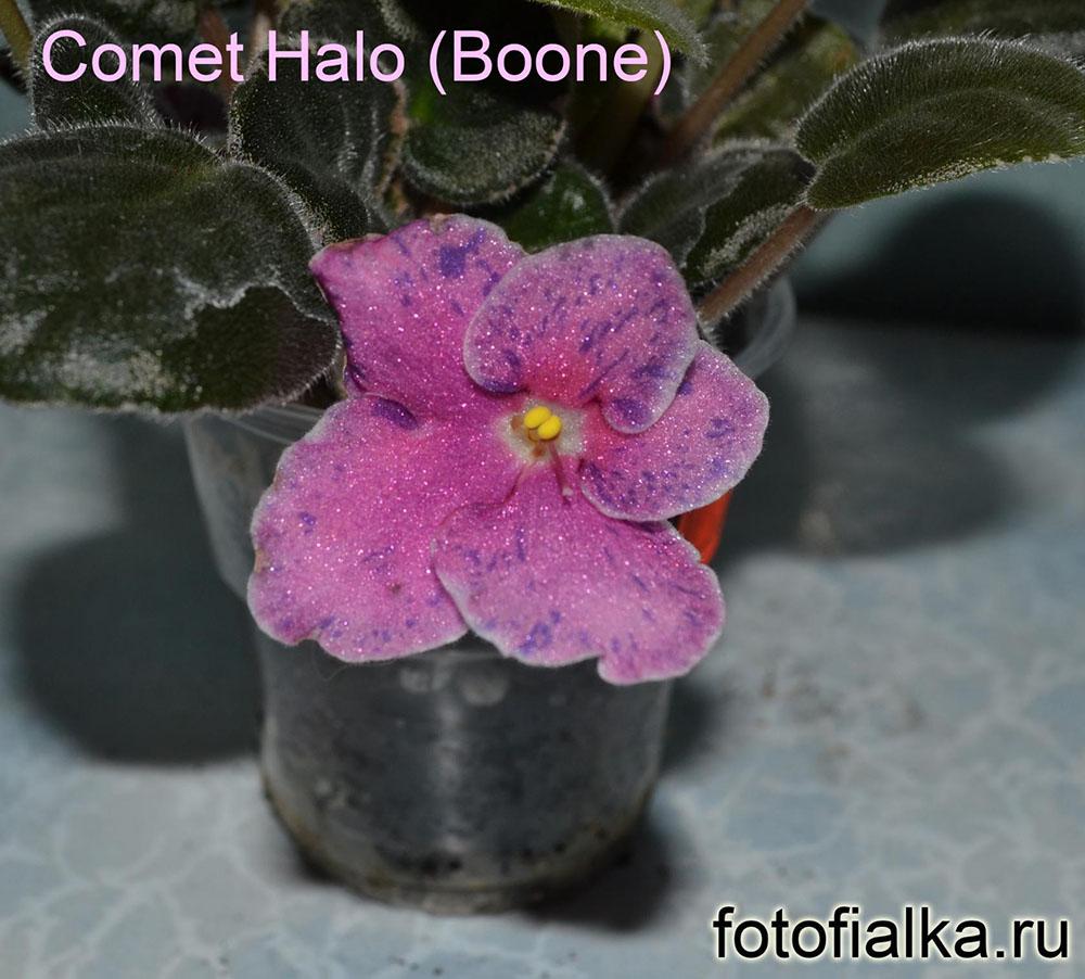 Comet Halo (Boone)