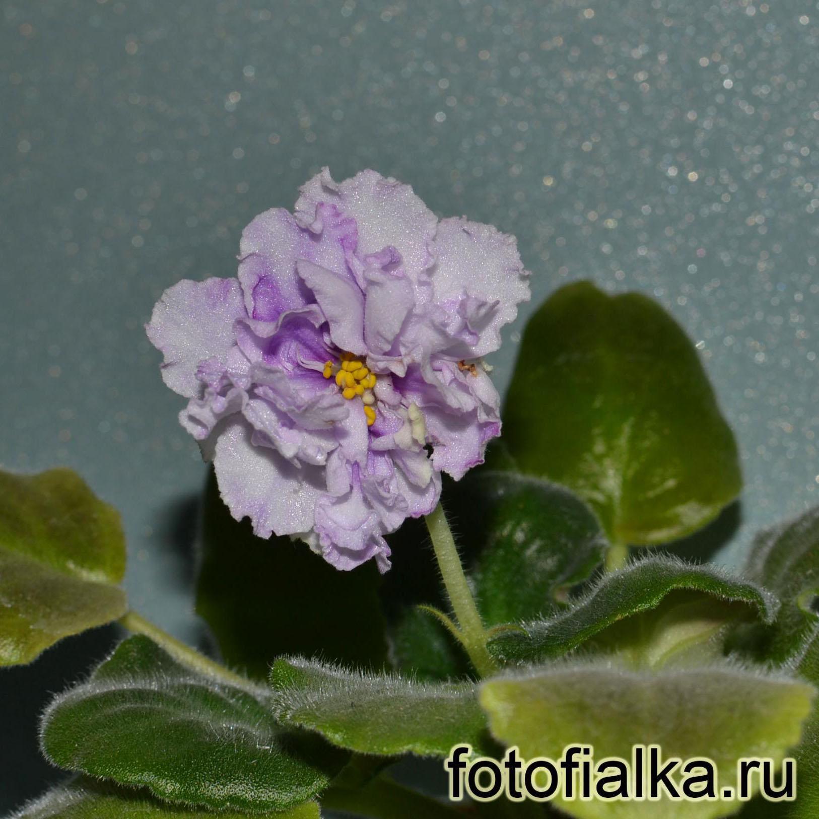 ЛЕ-Пломбир С Черникой (Е. Лебецкая)